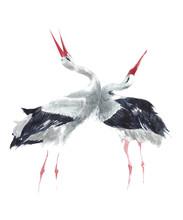 Cranes Singing Dancing Breedin...