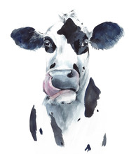 Cow Head Portrait Black And White Farm Animal Watercolor Painting Illustration Isolated On White Background