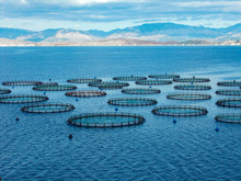 Sea Fish Farm Nets. Cages For ...