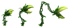 Plant Vines Bite, Growing