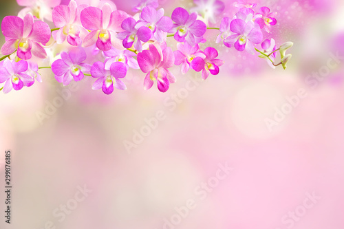 Autocollant pour porte Orchidée pink and purple orchid flowers border background