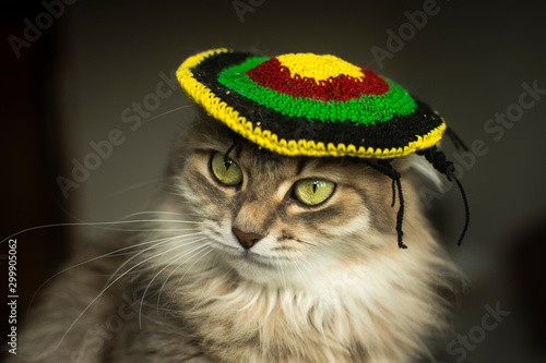 Valokuva  cat in a rasta hat