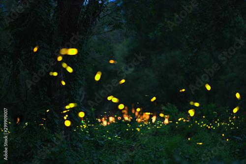 Foto auf Gartenposter Schwarz firefly in forrest