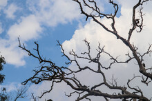 Bare Tree Branches No Leaves With Blue Sky In Background Landscape