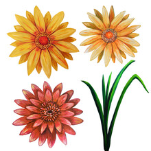 Set With Red Sunflowers And Calendula Flowers Isolated On White Background.