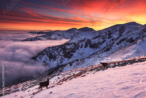Poster Rose clair / pale Sunset in Kopa Kondracka in Polish Tatra Mountains in winter snow weather conditions