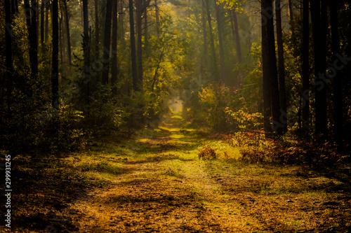 Foto auf Gartenposter Wald Forest road in autumn , with sunlight