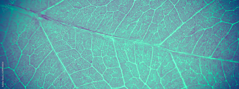 Fototapety, obrazy: Abstract organic texture of leaf. Nature wallpaper.