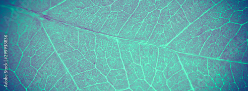 Abstract organic texture of leaf. Nature wallpaper. Fototapet