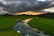 Herd Of Cows Crossing River Storm Overhead With Sunset In Background