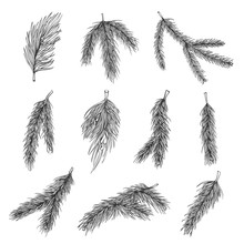 Fir Tree Branches Hand Drawn Illustrations Set