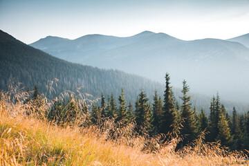 Panel Szklany Góry Location Carpathian national park, Ukraine, Europe.