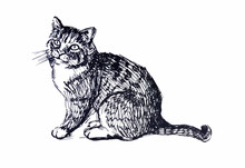 Cute Cat. Line Drawing. Black And White Illustration
