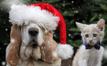 Dog In Santa Hat And The Cat