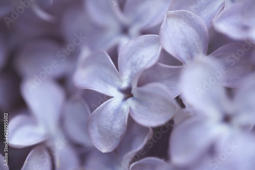 Photo sur Toile Lilac Blurred abstract background with lilac flowers