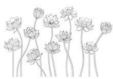 Black And White Lotus Flowers Isolated Vector Drawing. Botanical Illustration.