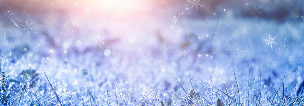 Fototapety, obrazy: Winter frosty morning. Winter snow background, blue color, snowflakes, sunlight, macro. Frozen grass under the snow, snowflakes and sunlight, rays. Blurred background.