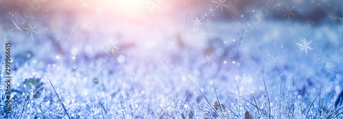 Winter frosty morning. Winter snow background, blue color, snowflakes, sunlight, macro. Frozen grass under the snow, snowflakes and sunlight, rays. Blurred background.
