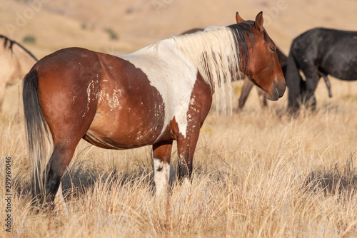 Beautiful Wild Horse in the Utah desert