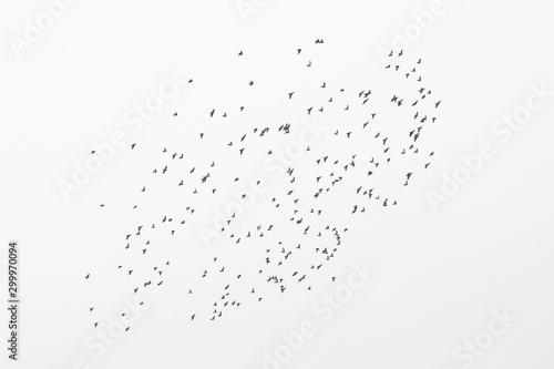 Valokuva  aerial, air, aloft, animal, background, beauty, bird, bird silhouette, birds, bi