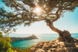 Beautiful juniper tree on the edge of a cliff overlooking a cape in the sea and the sun in the branches