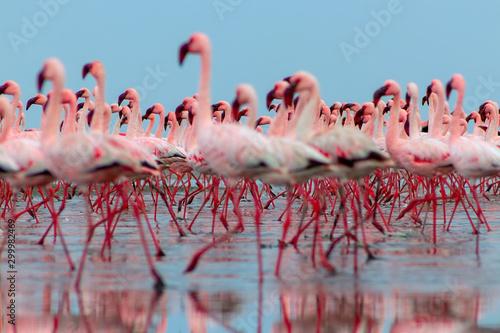 Photo  Wild african birds