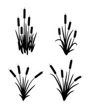 Vector Set Of Typhaceae Marsh Herb