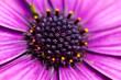 Leinwandbild Motiv closeup of purple flower