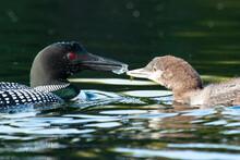 Look Feeding Baby