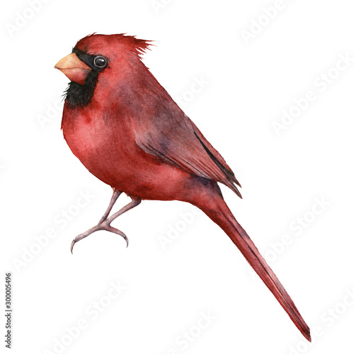 Photo  Watercolor red cardinal