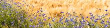 Randstreifen - Kornblumen An Einen Getreidefeld