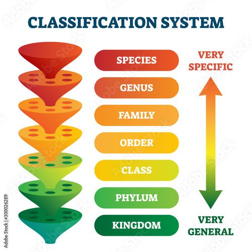 Classification system vector illustration Wallpaper Mural