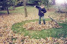 Boy Raking Leaves In A Yard Do...