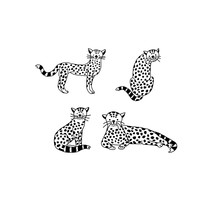 Set Of Baby Leopard In Doodle Style, Vector Illustration.