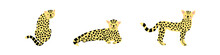 Baby Leopard In Different Poses, Vector Illustration.