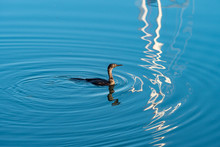 One Cormorant Fishing In The R...