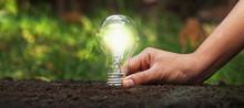 Holding A Light Bulb On The Gr...