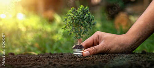 Obraz Holding a light bulb on a green tree on the background, natural energy saving concept - fototapety do salonu
