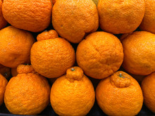 Close Up On Sumo Citrus Oranges, A Cross Breed Between A Satsuma And Mandarin Pomelo Variety. The Juicy, Ultra Sweet Oranges Were Developed In Japan With Traditional Plant Breeding Technique.
