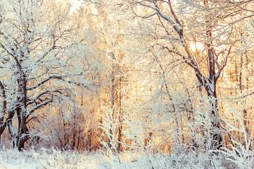 Fototapeta Współczesny snowy winter landscape with forest and sun