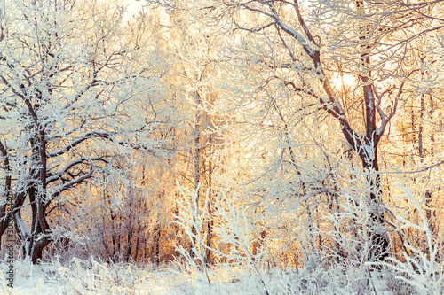 Photo sur Toile Beige snowy winter landscape with forest and sun