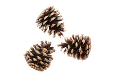 Christmas Pine Cones On White Background