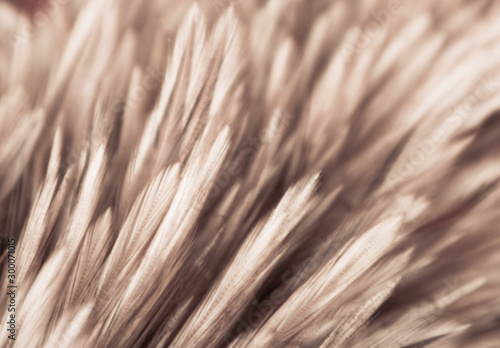 Autocollant pour porte Macro photographie Beautiful abstract white gray and brown feathers on dark background and colorful soft brown white feather texture on white pattern