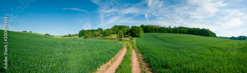 Panorama of summer green field. European rural view. Beautiful landscape of wheat field and green grass with stunning blue sky and cumulus clouds in the background.