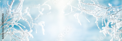 Foto op Canvas Lichtblauw Winter background with snowy and iced branches of trees on blue sky backdrop. Christmas or New Year winter concept.