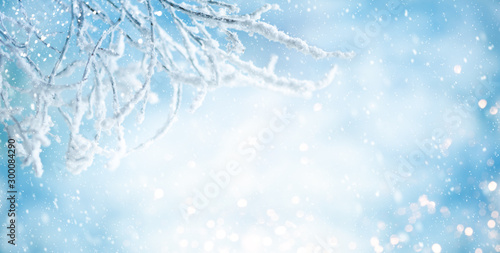 Obraz Winter background with snowy and iced branches of trees on blue sky backdrop. Christmas or New Year winter concept. - fototapety do salonu