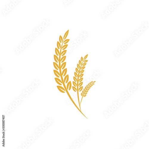 Obraz Agriculture wheat vector Illustration design template. elements of wheat grain, wheat ears, seed or rye, prosperity symbol	 - fototapety do salonu
