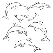 Hand Drawn Dolphins On White B...