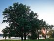 canvas print picture - Baum im Gegenlicht