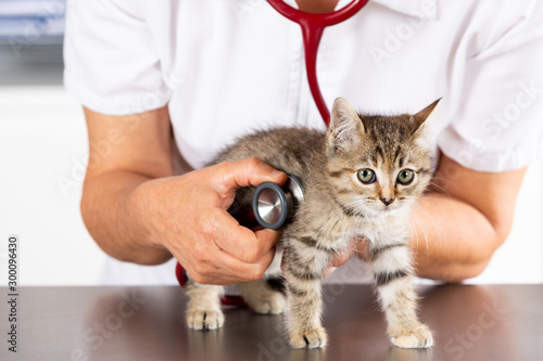 fototapeta na drzwi i meble Veterinary clinic with a kitten